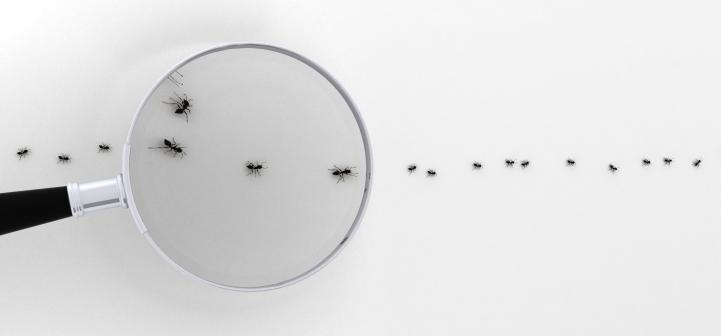 Ants and a magnifying glass.