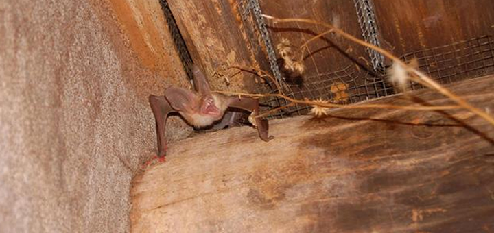 Bat in the corner of a log cabin.